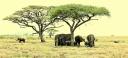 GAES Tanzania_Group 1---289