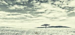 GAES Tanzania_Group 1---389