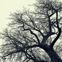 59_iPad_Branched_by Mutua Matheka