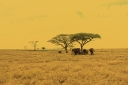 Serengeti_elephant c_by Mutua matheka