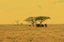 Serengeti_elephant c_by Mutua matheka