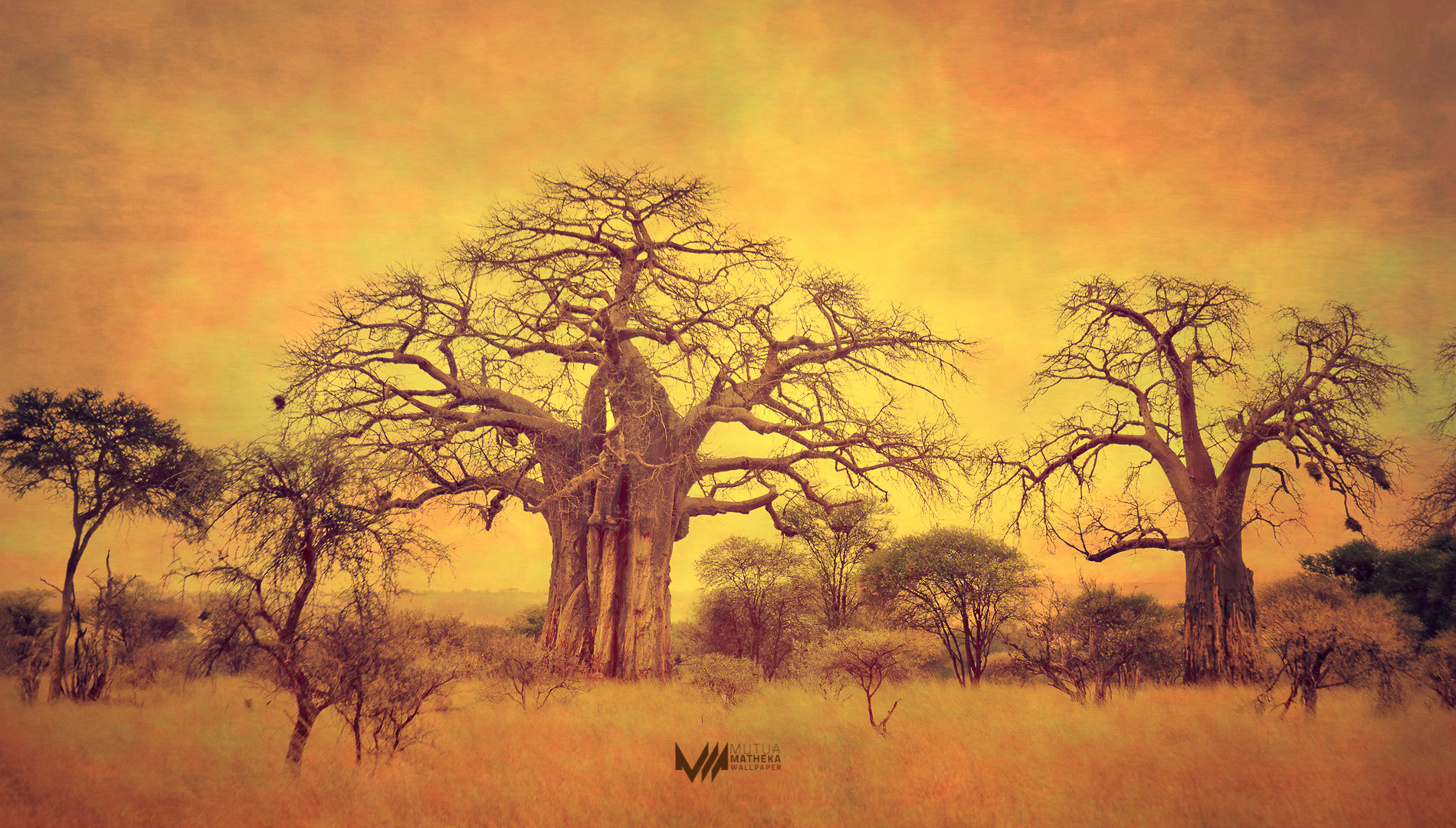 wallpaper tree baobab africa-#27